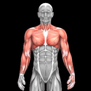 Arme und Schultern