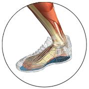 Anatomie des Fußes mit der Sporteinlage